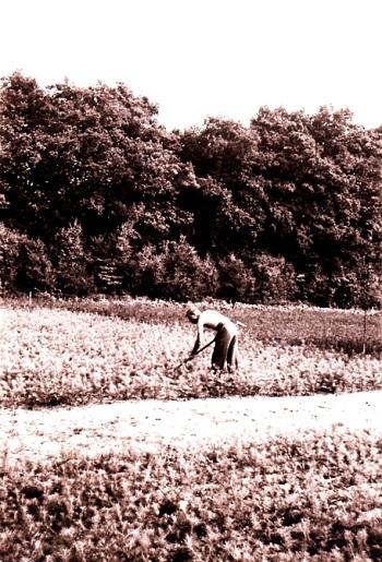 19530815 Rutger schoffelt in de kwekerij