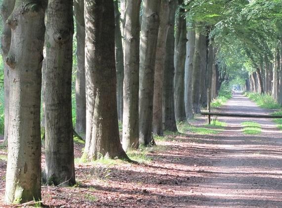 Laanbomen langs Eikensteeg 20140802