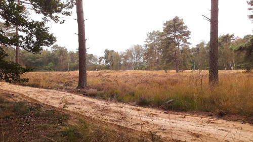 Paardenpad b langs heidegebied - 500