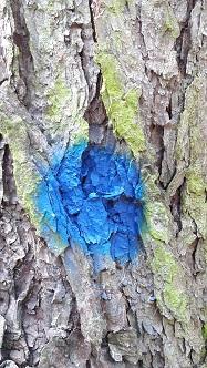 blesteken-blauwe-stip-187