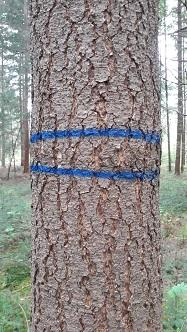 blesteken-blauwe-strepen-187