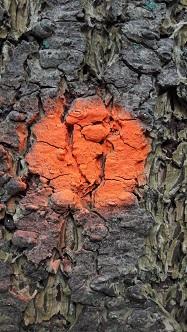 blesteken-oranje-stip-187