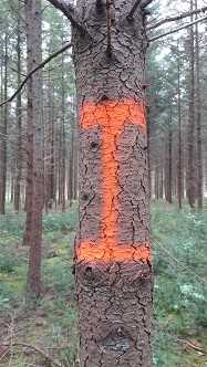 blesteken-oranje-vertikale-streep-187