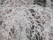 sneeuw-2017-01-130
