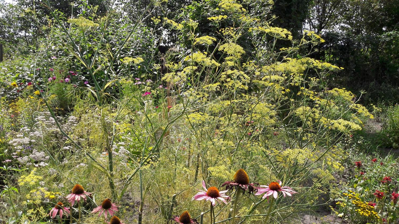 agnes-bloemenweelde-1500