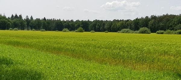 Boetzelaersveld laatste blik - 600