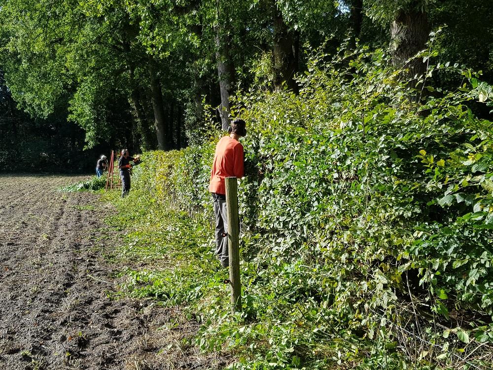 Vrijwilligers van de Landschapsbeheerploeg