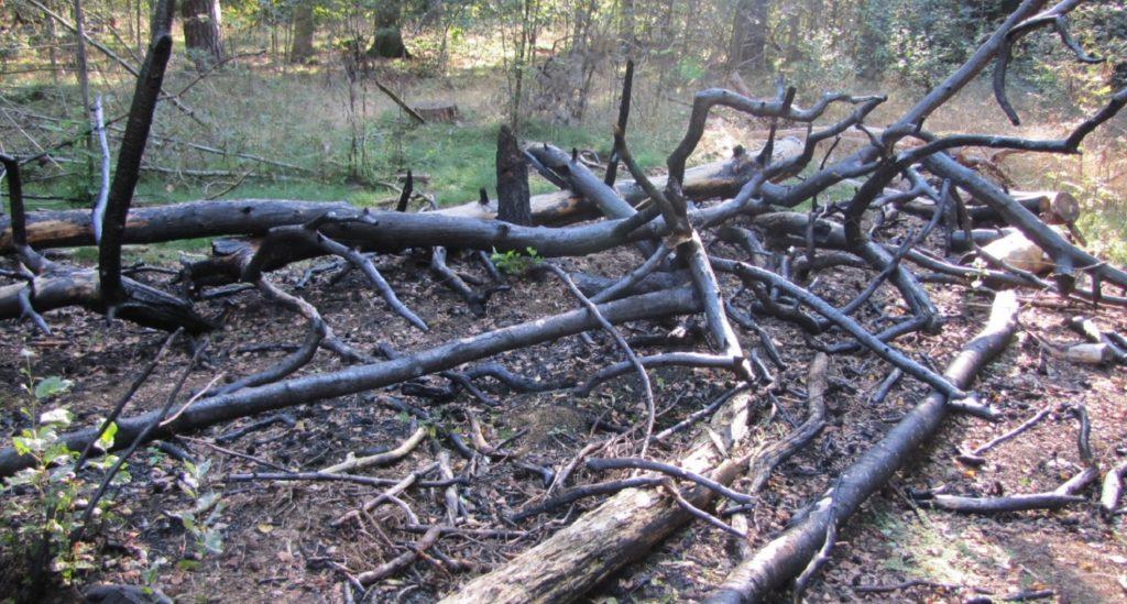 Vandalisme en andere onwenselijkheden in het bos