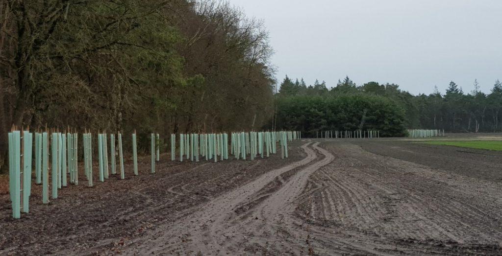 Voortgang omvorming Boetzelaersveld
