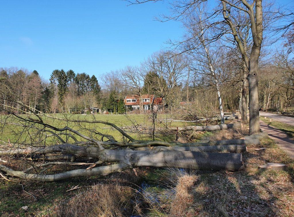202103 Bomen weiland b1200